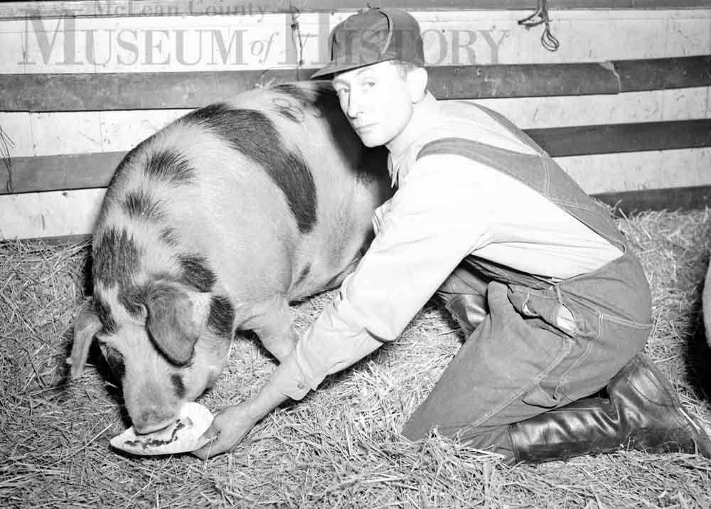 Photo of a man feeding a pig a slice of pie.