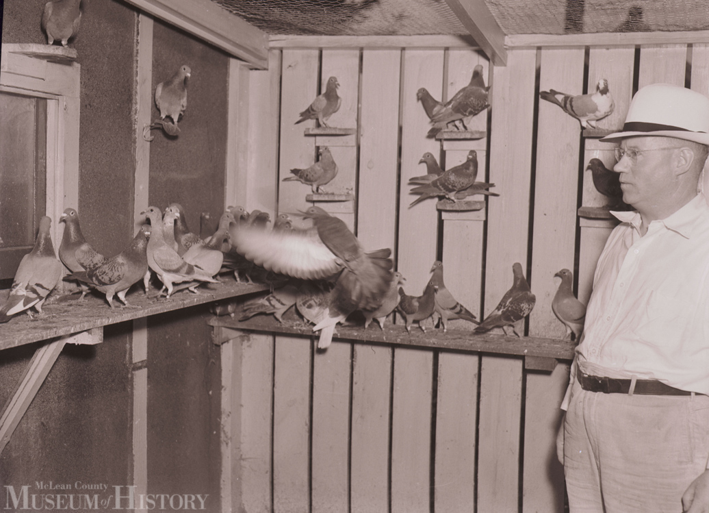 Seen here is Bloomington restaurateur Carl J. Loeseke tending to many of his homing pigeons at his 1103 W. Moulton St. (now MacArthur Ave.) residence